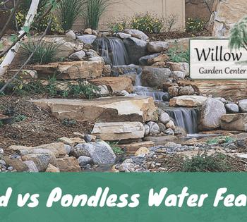 pond vs pondless