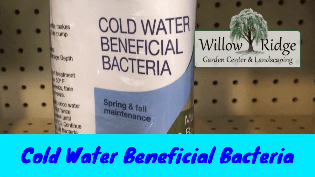 cold water bacteria