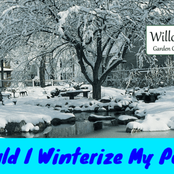 winterize my pond