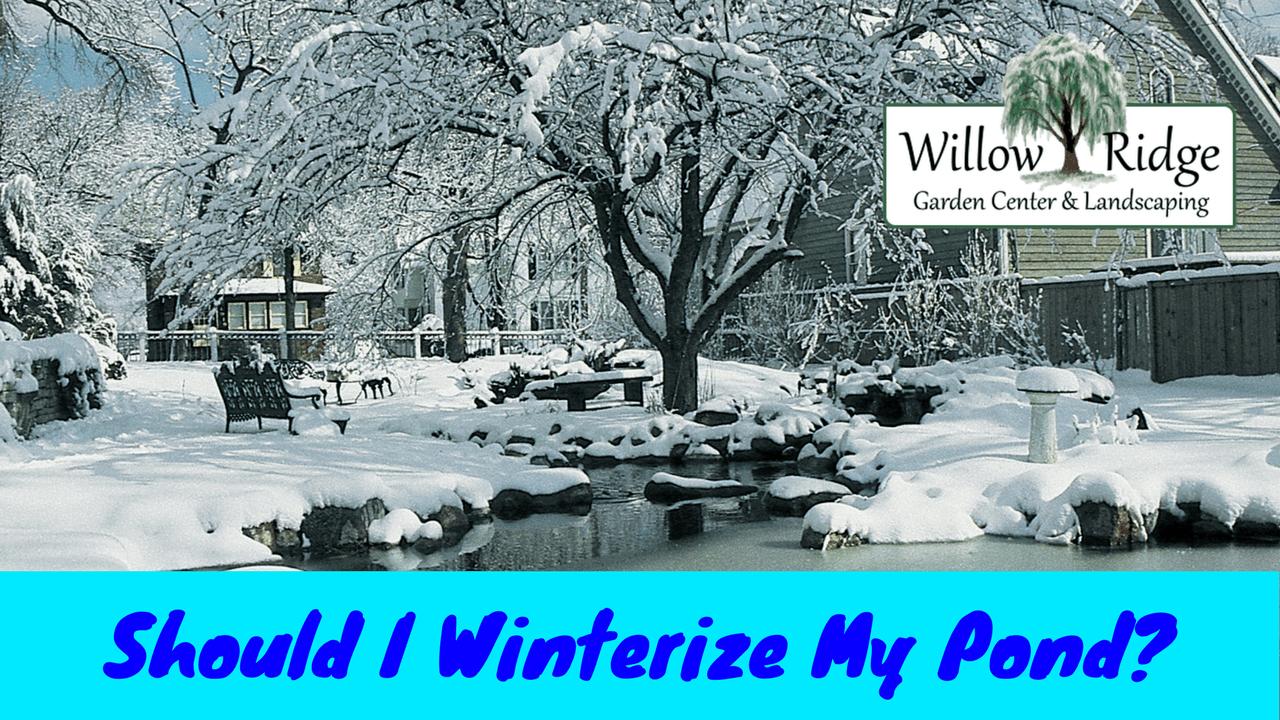 winterize my pond