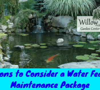 water feature maintenance package