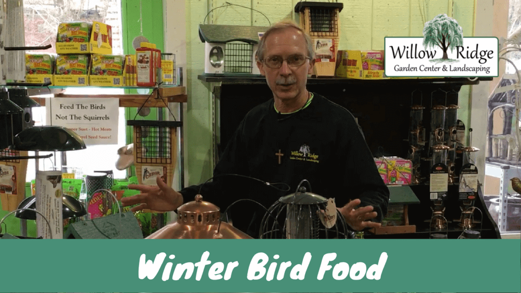 winter bird food