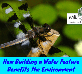 water feature benefits
