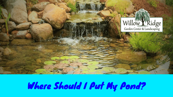 Where Should I Put My Pond?