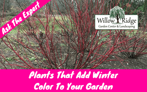 add winter color