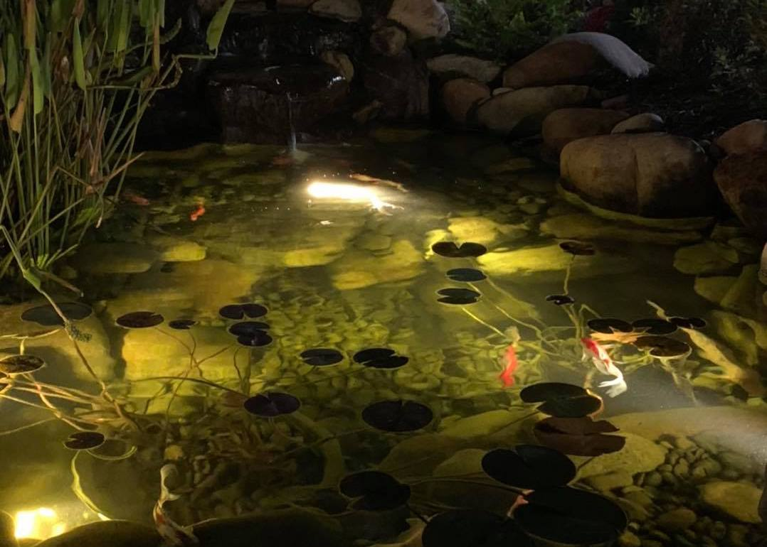 Pond Landscape Lighting Services