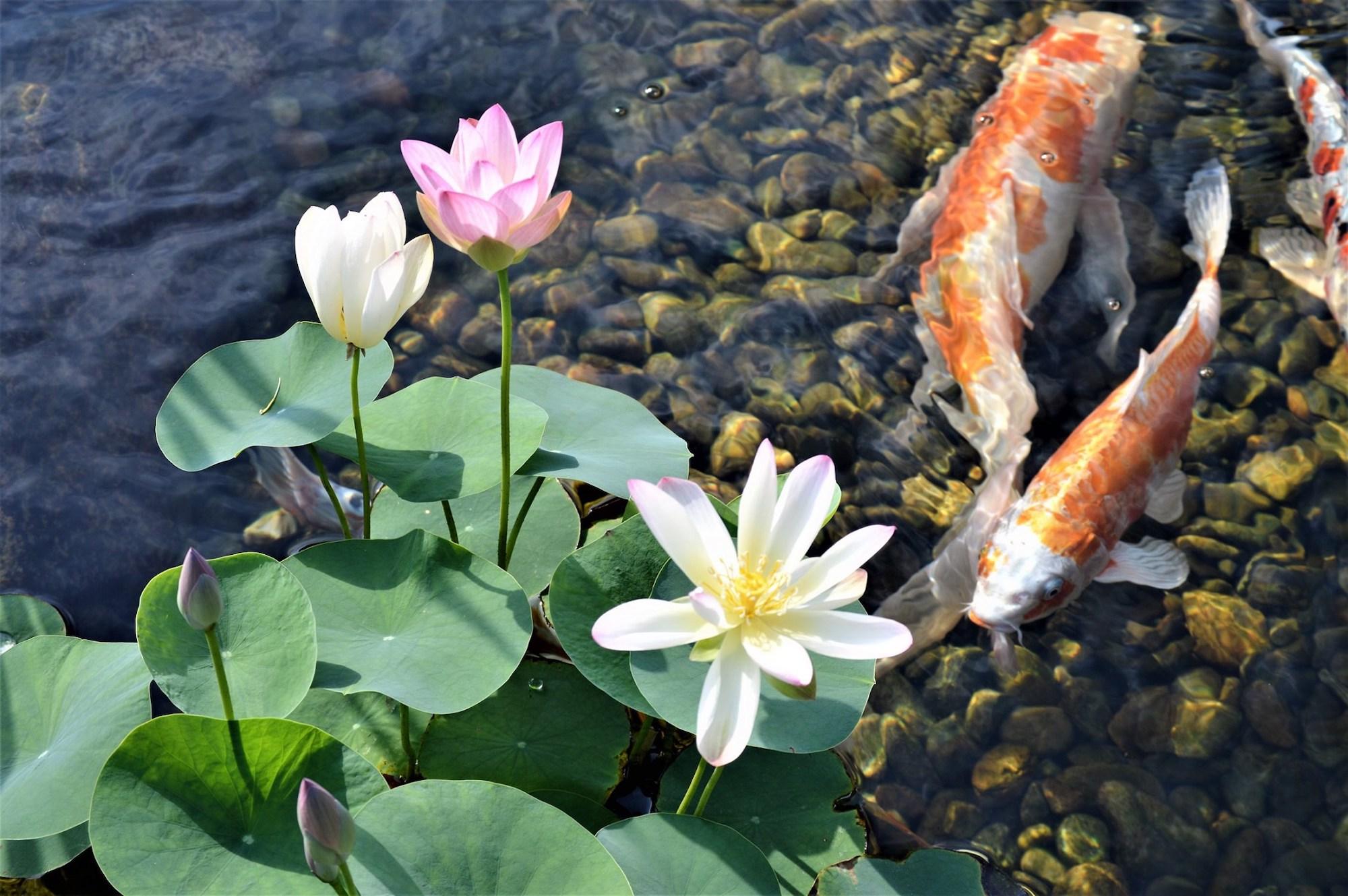 Pond Renovation Services